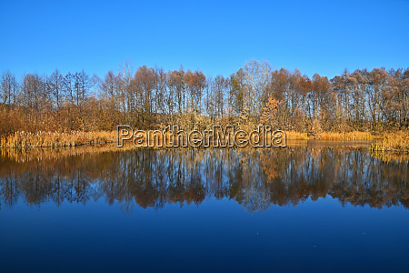 autumn trees reflection in lake water