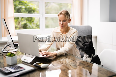 business women working on laptop computer