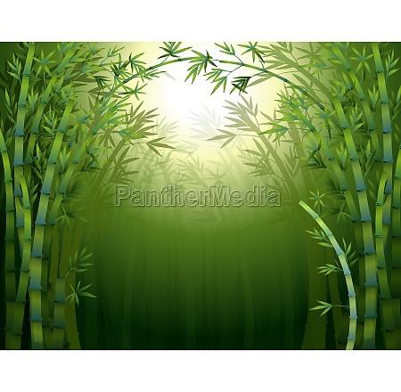 a dark bamboo forest