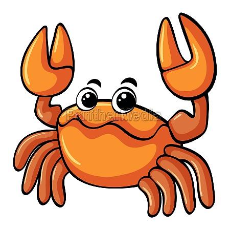 orange crab on white background